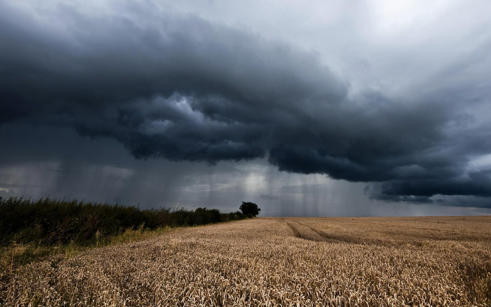 Жатва хлебов в Северной Осетии затягивается из-за дождей